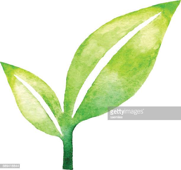 Leaf Pair Watercolor
