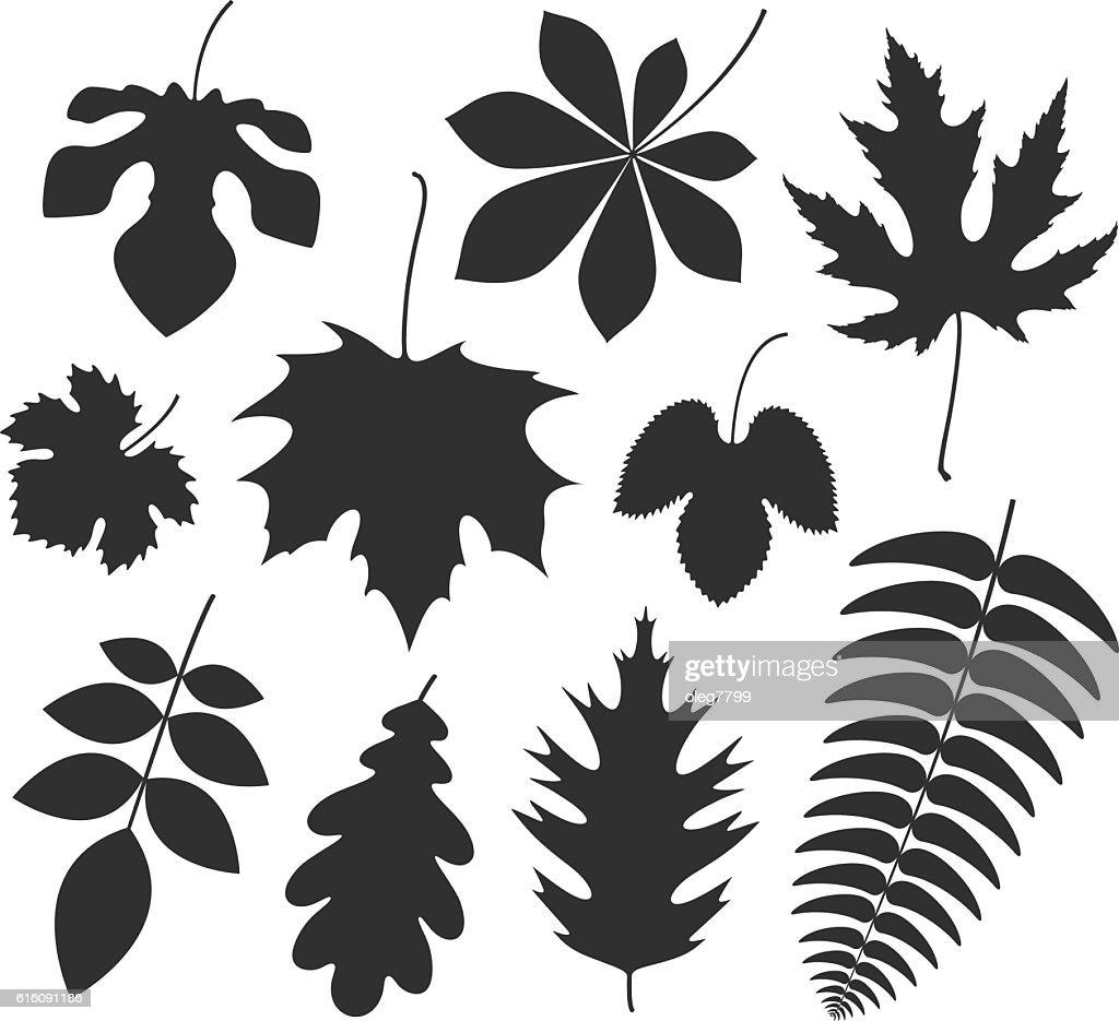 Leaf. Silhouette