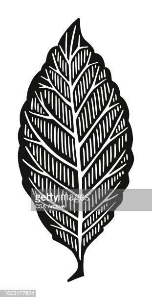 leaf - cardiopulmonary system stock illustrations, clip art, cartoons, & icons