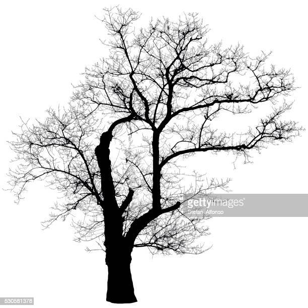 Senza foglie albero forma