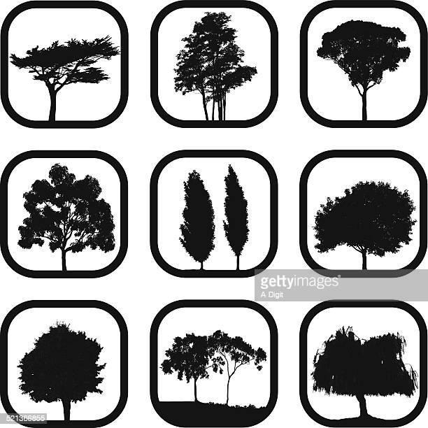 leafy trees - aspen tree stock illustrations, clip art, cartoons, & icons