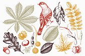 Leaves and seeds illustrations collection