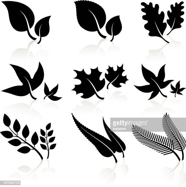 leaves black and white - evergreen stock illustrations