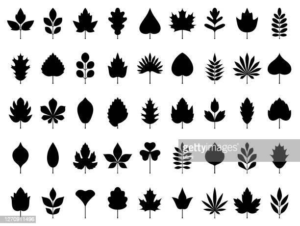 stockillustraties, clipart, cartoons en iconen met pictogram bladeren set - leaf