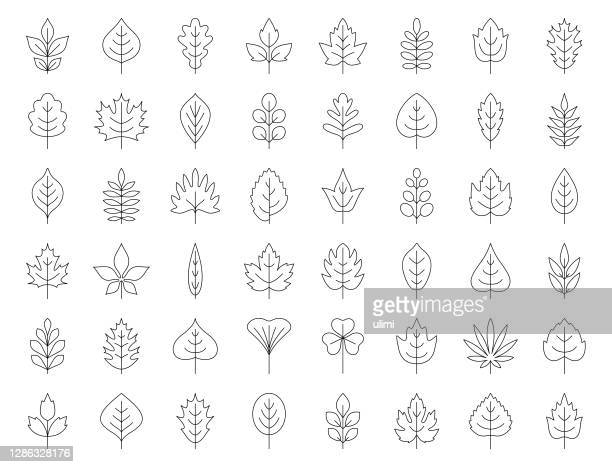 葉アイコンセット - オークの葉点のイラスト素材/クリップアート素材/マンガ素材/アイコン素材