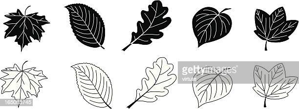 leaves in black and white - oak leaf stock illustrations
