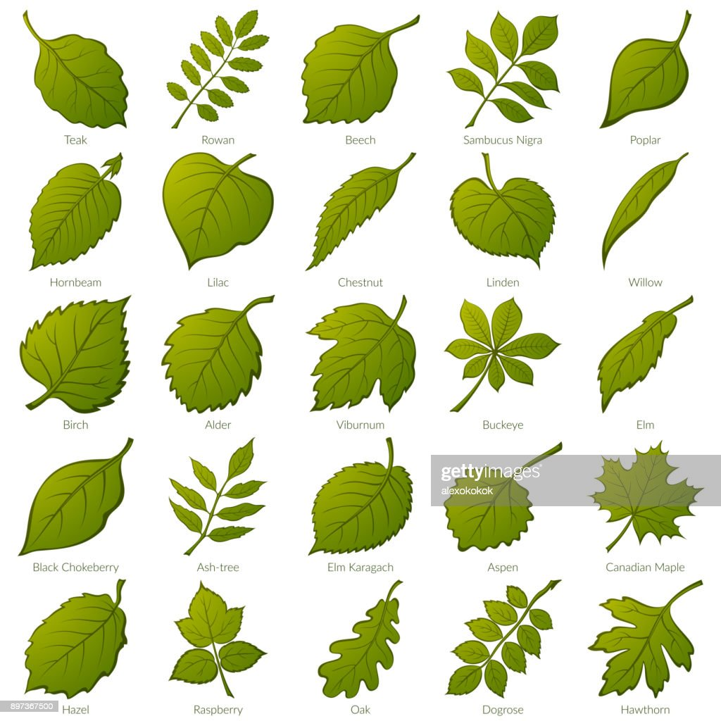 Leaves of Plants, Set