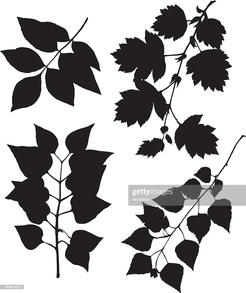 leaves on branches : Vector Art
