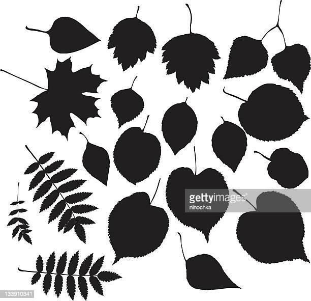 ilustrações, clipart, desenhos animados e ícones de folhas galhos - pilritreiro