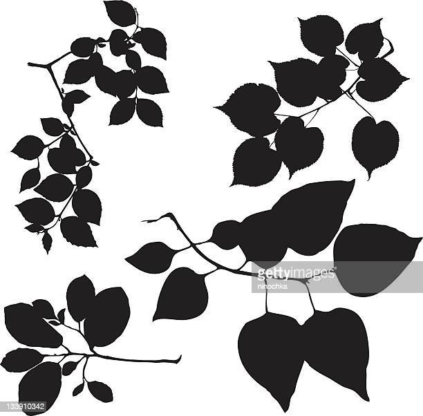 leaves on branches - ash stock illustrations, clip art, cartoons, & icons