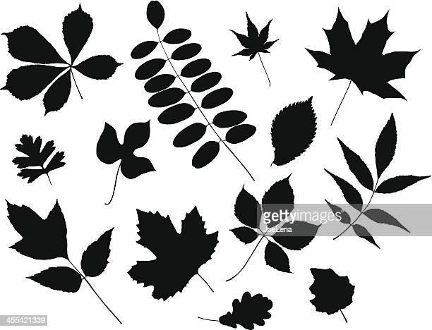 ilustrações, clipart, desenhos animados e ícones de folhas silhueta - pilritreiro