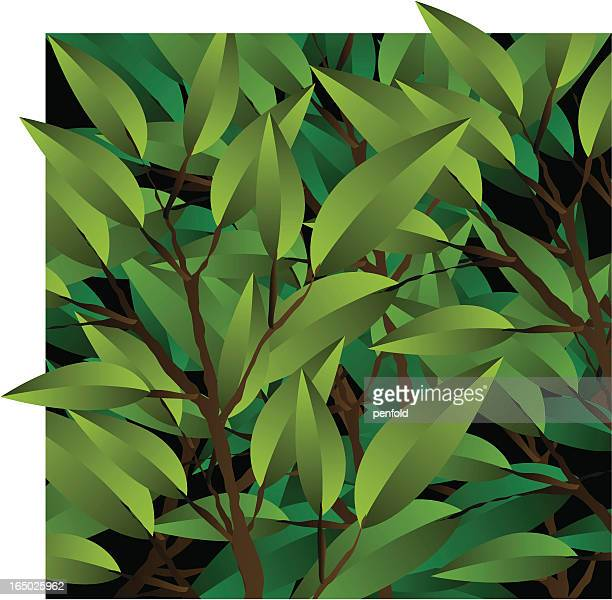 leaves - grove stock illustrations, clip art, cartoons, & icons