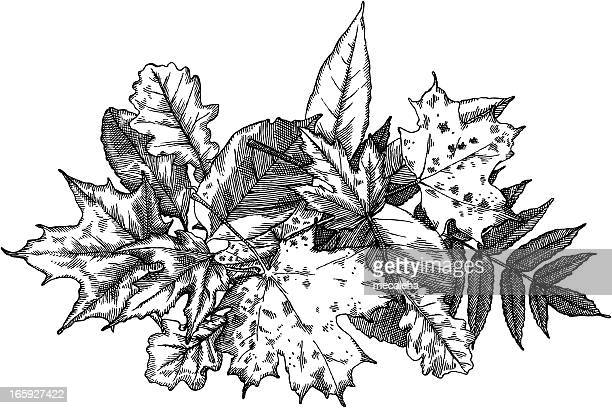 445 Pile Of Leaves High Res Illustrations Getty Images