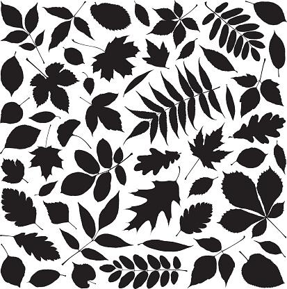 Leaves - gettyimageskorea