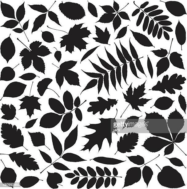 leaves - deciduous tree stock illustrations, clip art, cartoons, & icons