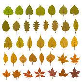 Leaves Vector Set