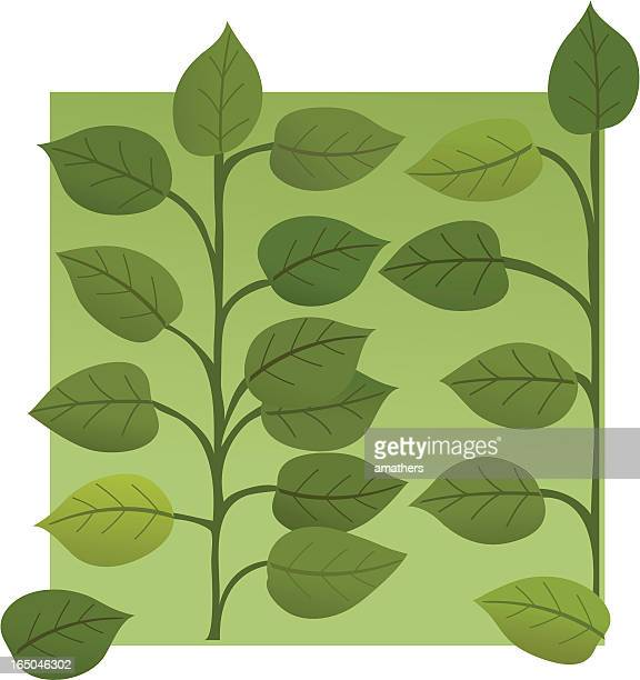 leaves wallpaper - mint leaf culinary stock illustrations, clip art, cartoons, & icons