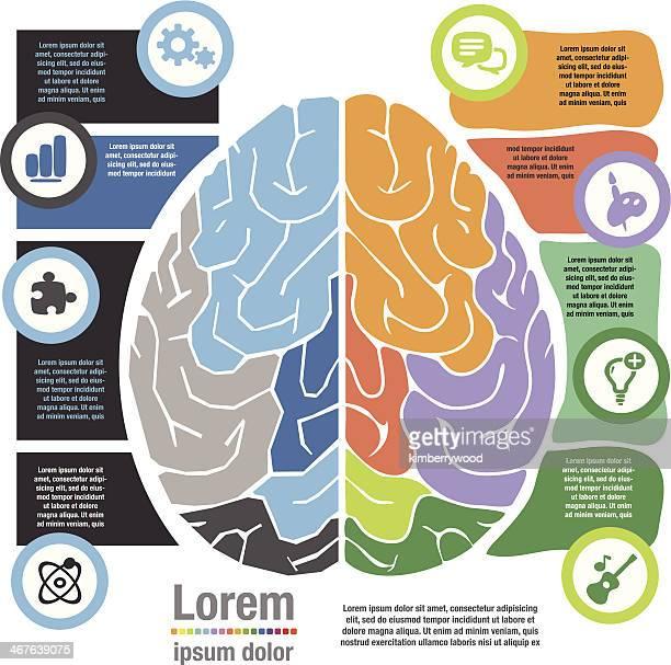 ilustrações, clipart, desenhos animados e ícones de left right cérebro sistema - cortar atividade