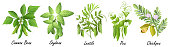 Legume plants (common bean. soybean, lentil, pea, chickpea ), set of vector illustrations.