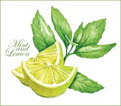 Lemon and mint sketches.