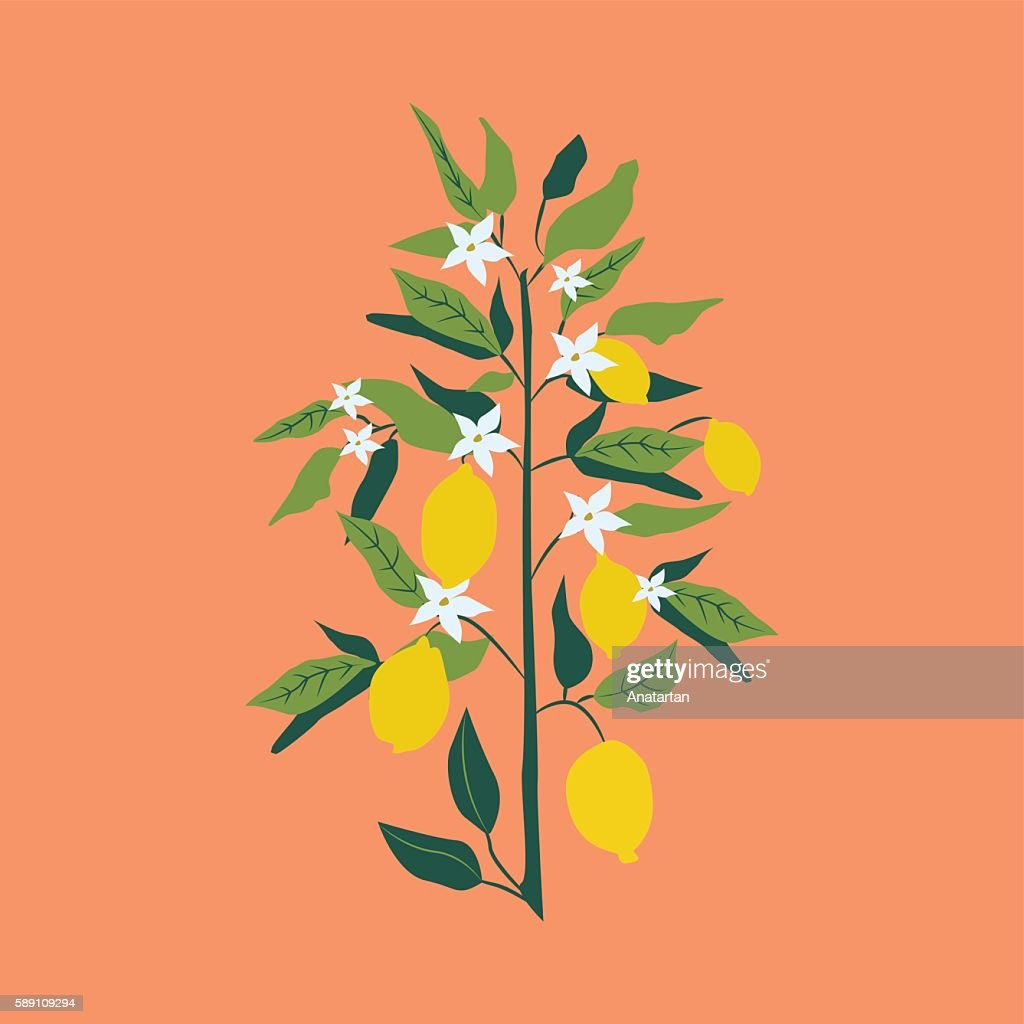 Lemon branch with green leaves