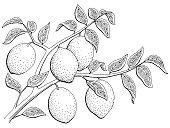 Lemon fruit graphic branch black white isolated sketch illustration vector