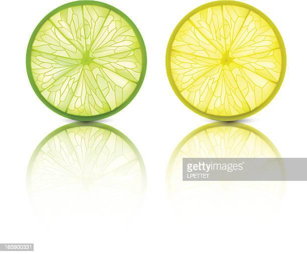 lemon lime - vector illustration - citrus fruit stock illustrations, clip art, cartoons, & icons