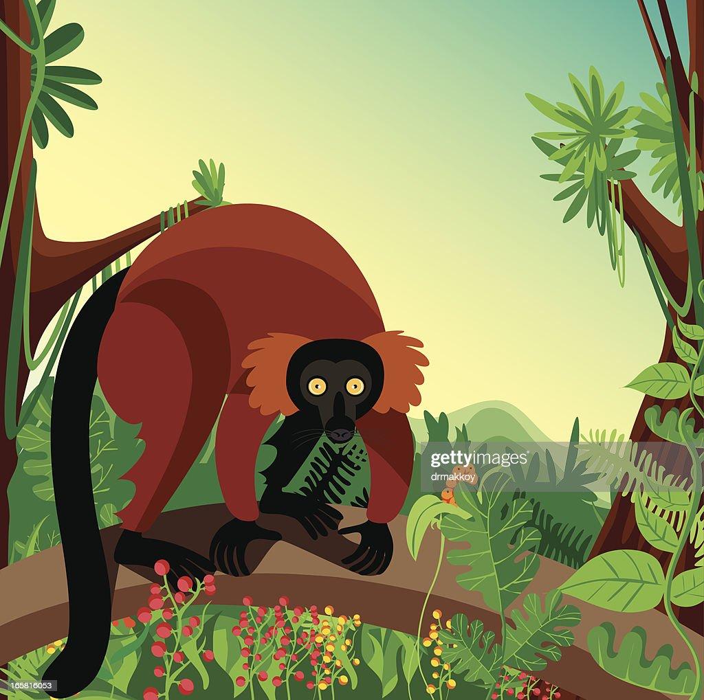 Lemur : Stock Illustration