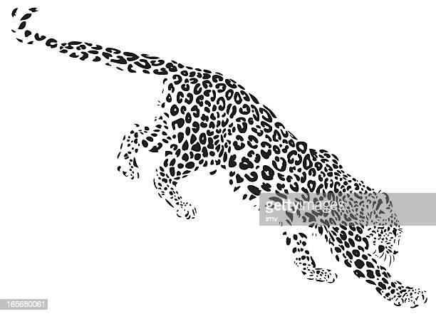 ilustraciones, imágenes clip art, dibujos animados e iconos de stock de leopardo desdending medio - leopardo