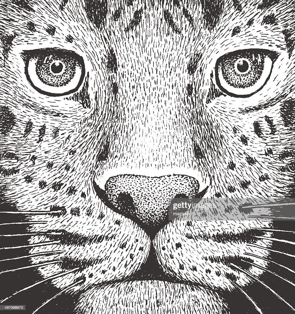 Leopard Engraving Illustration