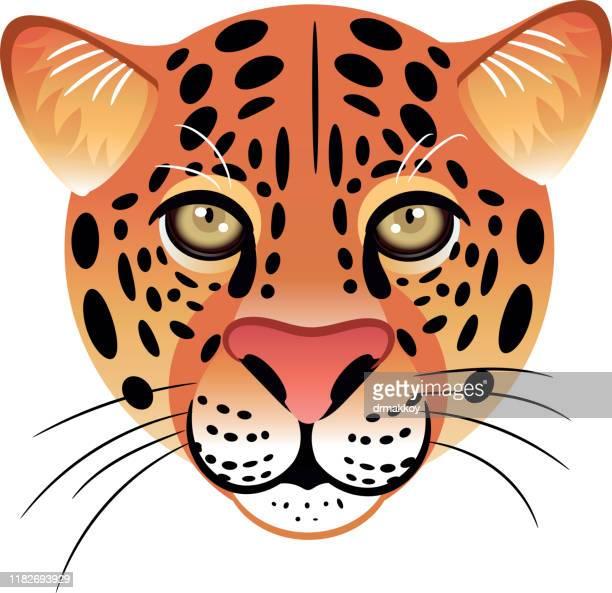 ilustraciones, imágenes clip art, dibujos animados e iconos de stock de cara de leopardo - jaguar