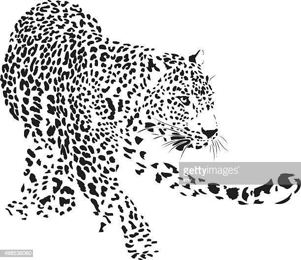 leopard illustration (panthera pardus) - leopard stock illustrations