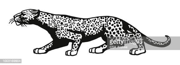 leopard on the prowl - leopard stock illustrations