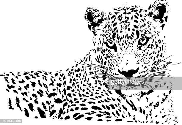 leopard portrait in black and white - leopard stock illustrations