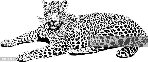 ilustraciones, imágenes clip art, dibujos animados e iconos de stock de retrato de leopardo en blanco y negro - leopardo
