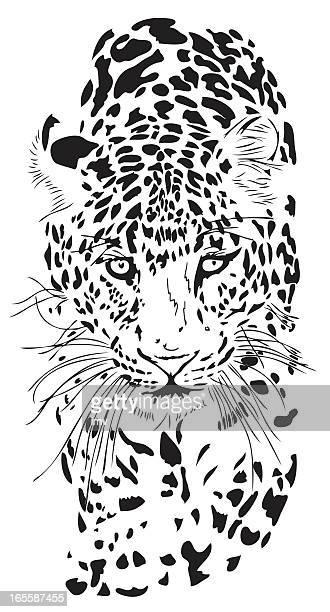Porträt von Leopard Panthera pardus
