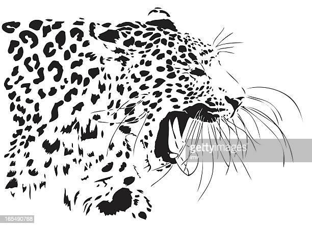 stockillustraties, clipart, cartoons en iconen met leopard yawn - yawning