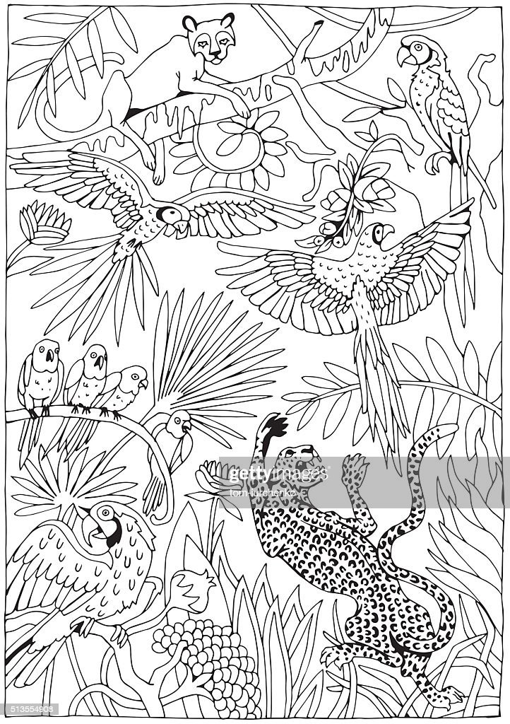 Leopards and Parrots in the Jungle