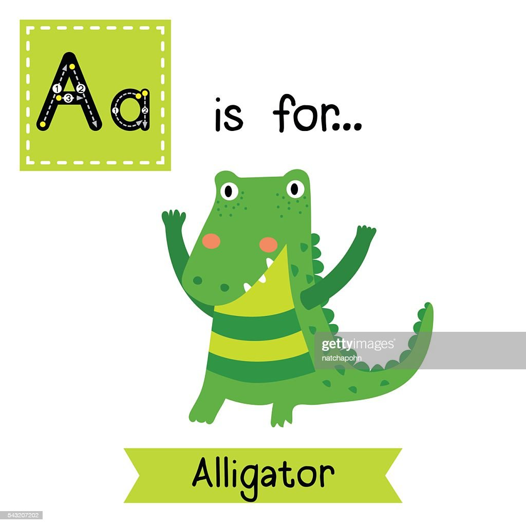 Letter A tracing. Standing Alligator.