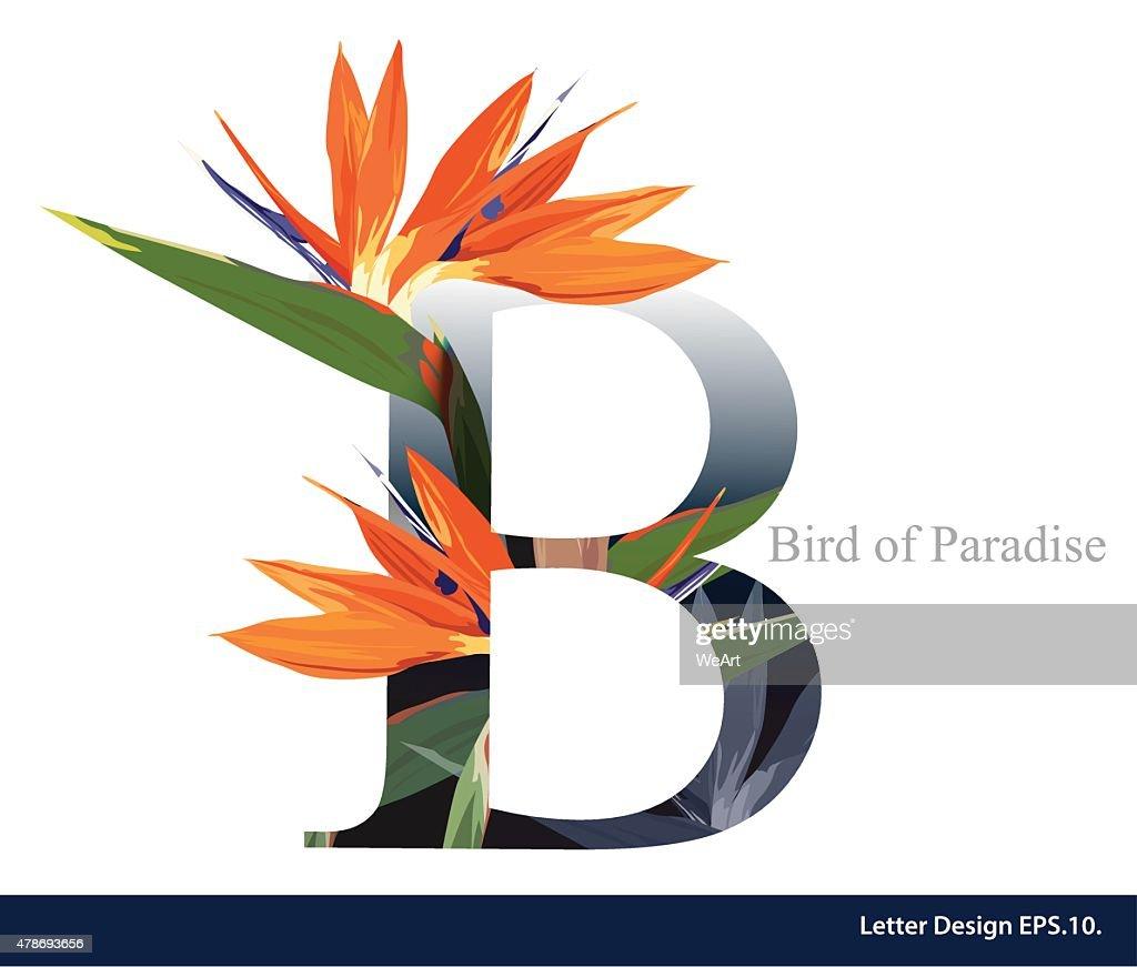 Letter B vector alphabet with bird of paradise flower.