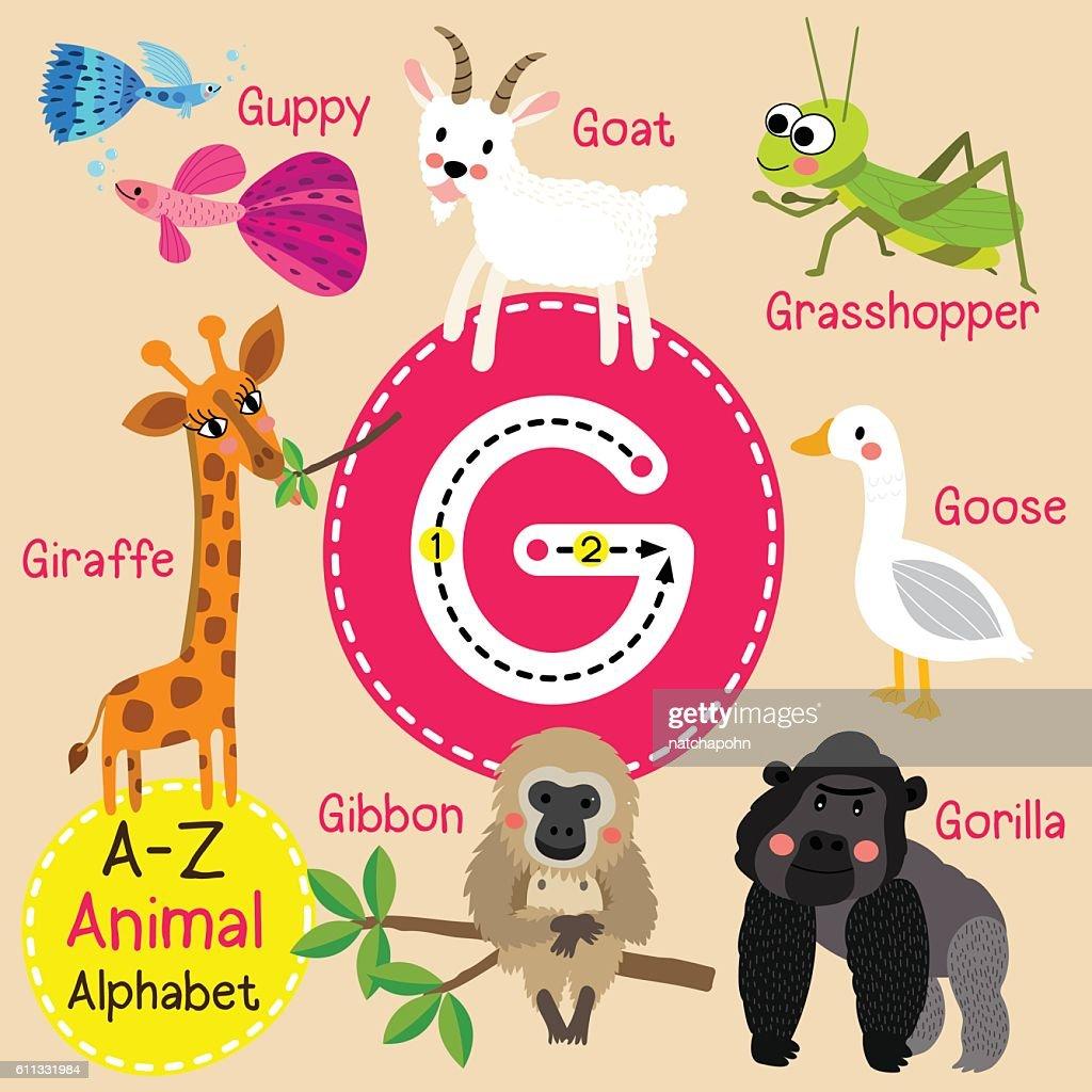 Letter G tracing. Gibbon. Giraffe. Goat. Goose. Gorilla. Guppy. Grasshopper