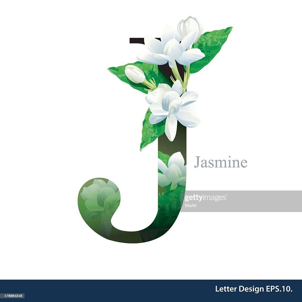 Letter J Vector Alphabet With Jasmine Flower Abc Concept Vector Art
