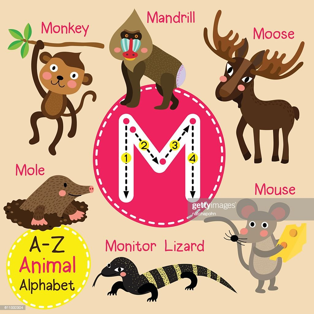 Letter M tracing. Monkey. Mouse. Mole. Monitor Lizard. Moose. Mandrill