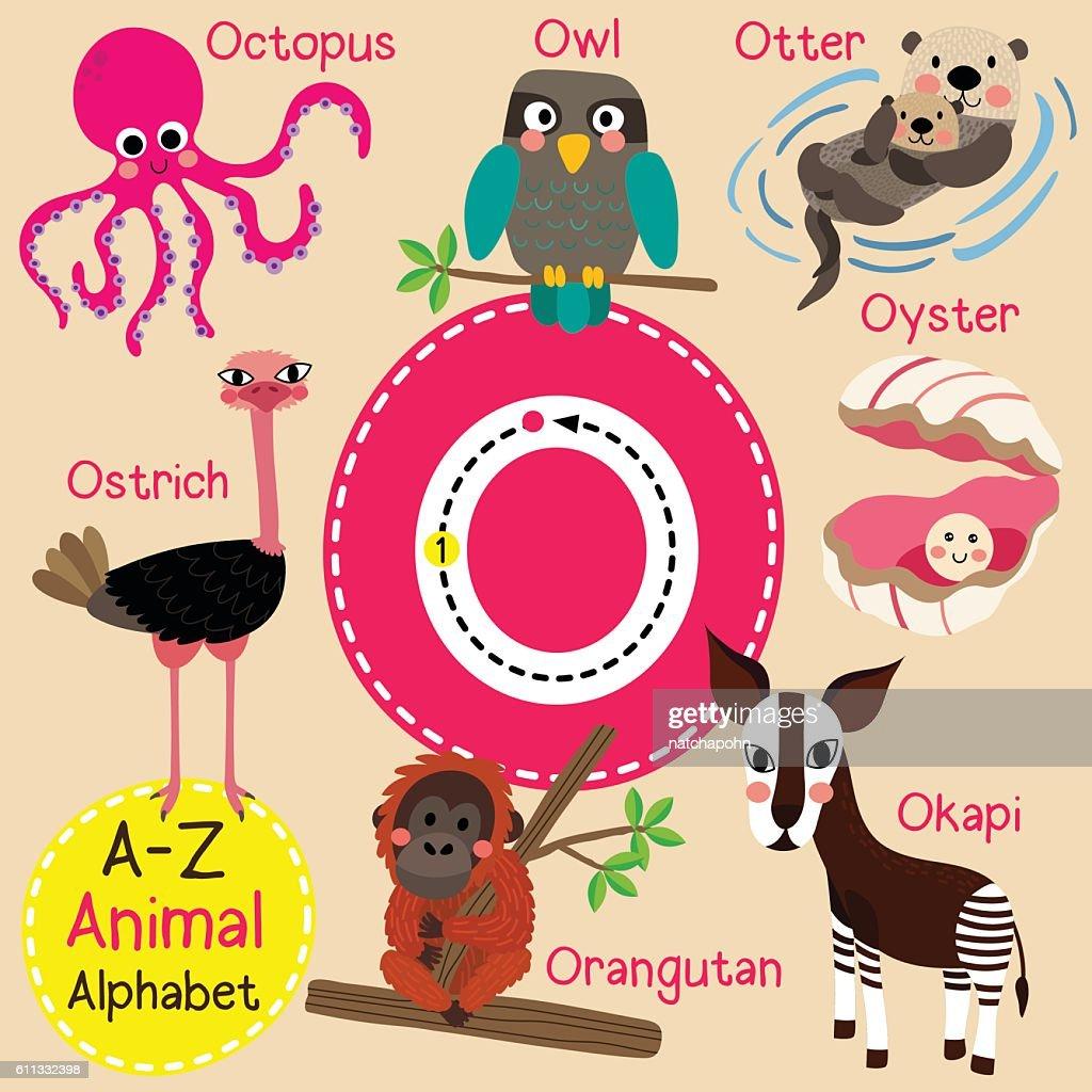 Letter O tracing. Octopus. Orangutan. Otter. Owl. Oyster. Ostrich. Okapi.