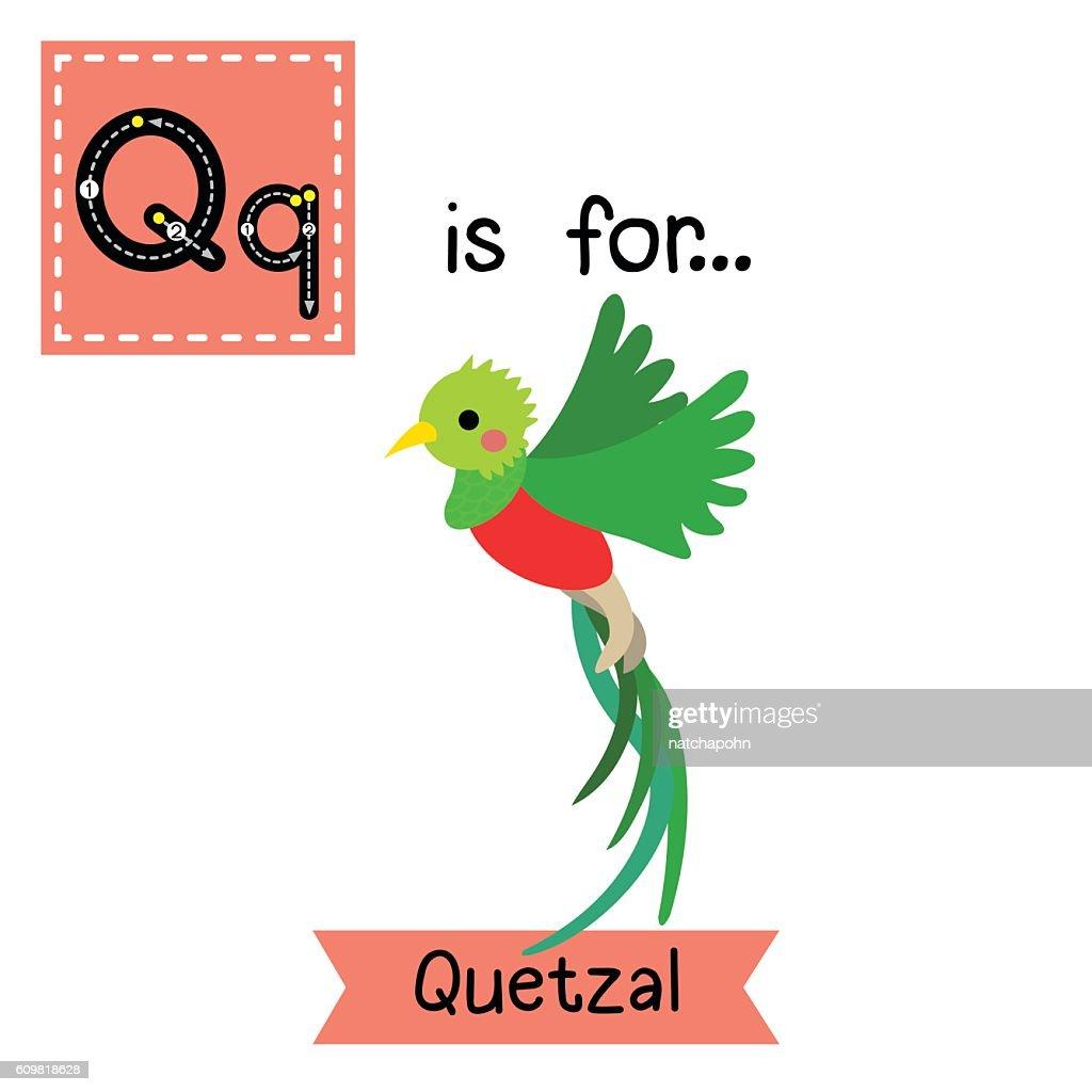 Letter Q tracing. Flying Quetzal bird.