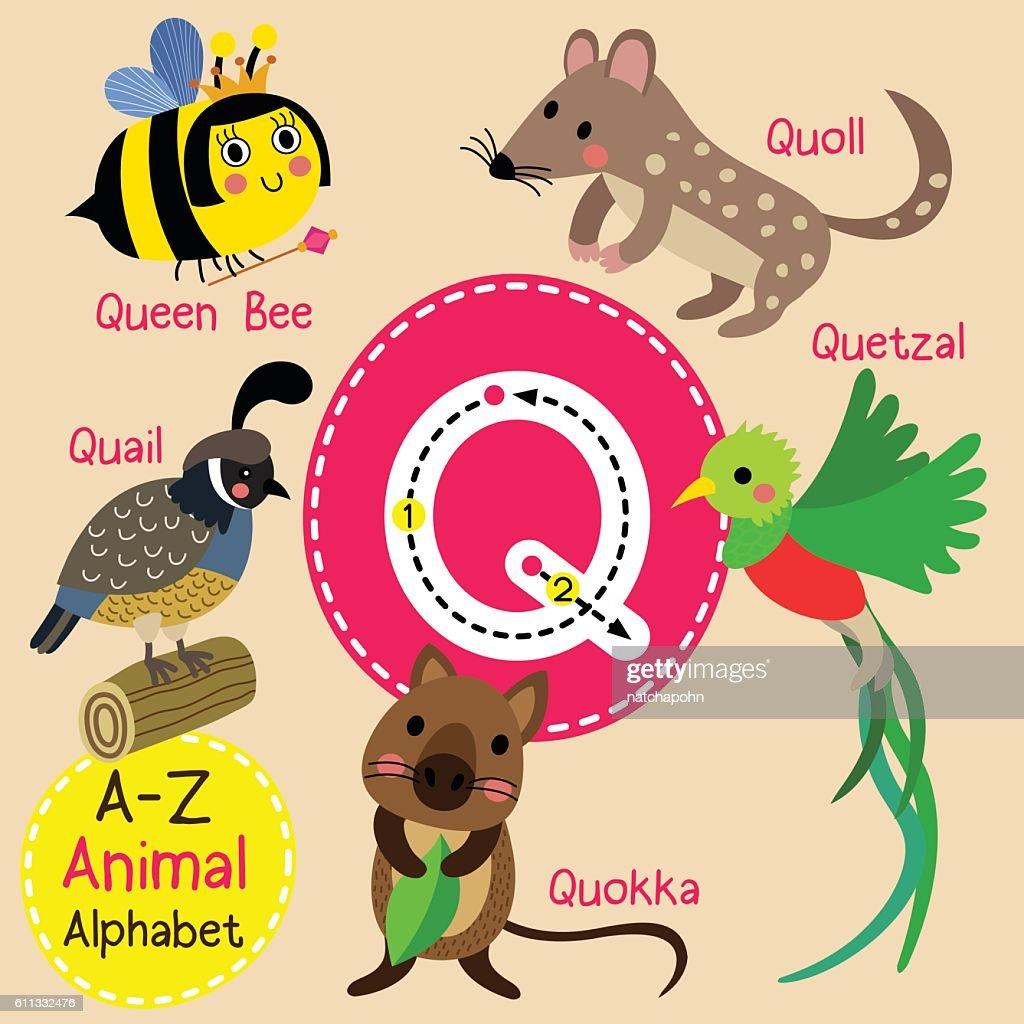 Letter Q tracing. Quail. Queen Bee. Quetzal. Quokka. Quoll.