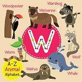 Letter W tracing. Walrus. Warthog. Whale. Wolf. Wolverine. Worm. Woodpecker
