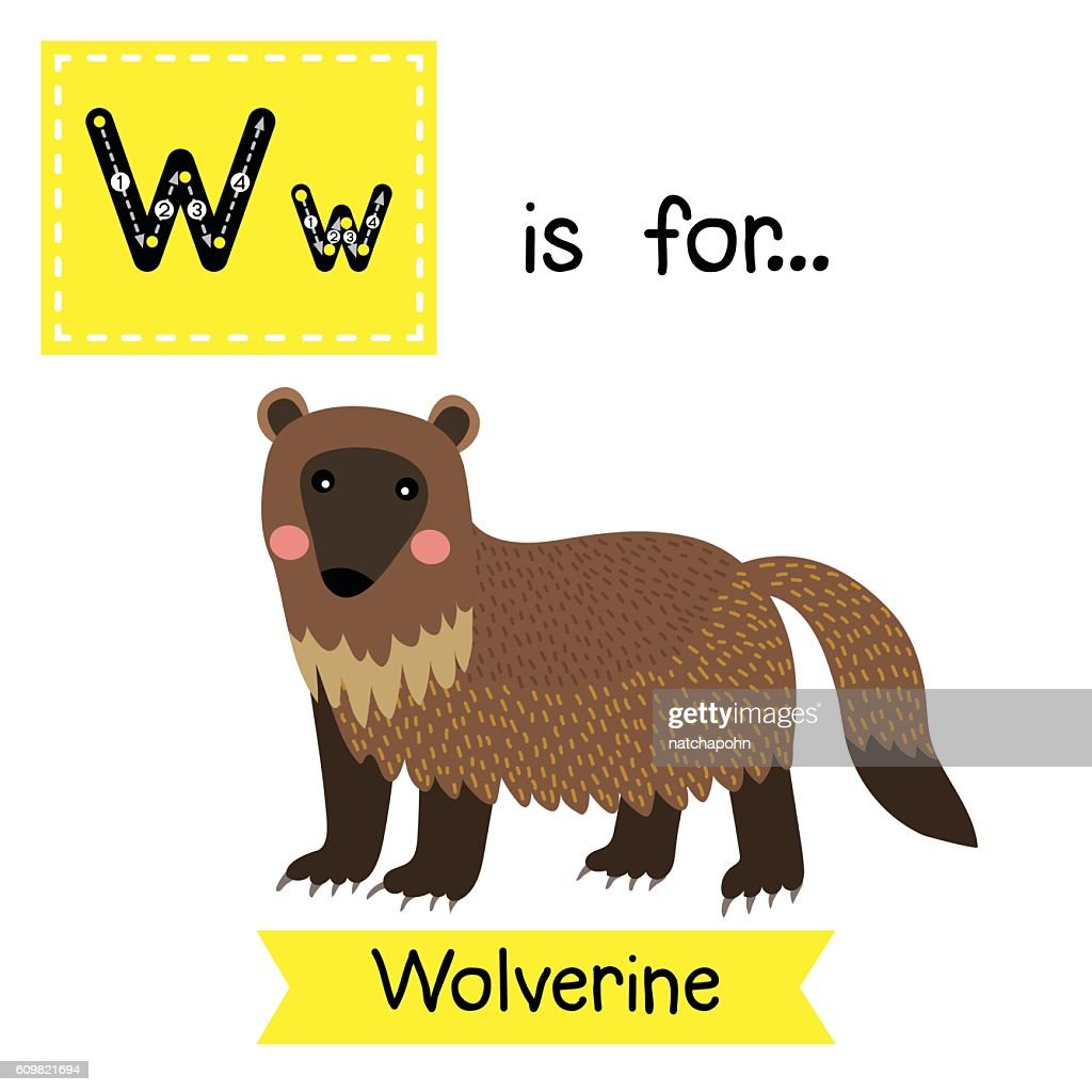 Letter W tracing. Wolverine.