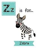 Letter Z tracing. Zebra.