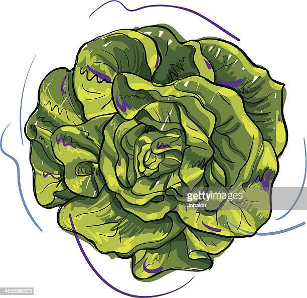 30 Meilleurs Salade Composée Illustrations Cliparts